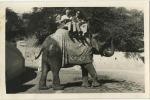 Olifant - Elephant  (  Foto Kaart Agfa ) - Éléphants