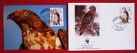 WWF Ansichtskarte Tiere Vogel Der Wespenbussard Mit Briefumschlag 1991 Postkarte - Birds