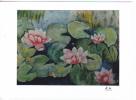 Nénuphars En Fleurs. Photographie 11,5 X 8,5 Cm Sur Papier Kodak. - Photographs