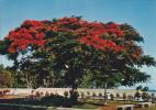 Ile De La Réunion,ile Française,outre Mer,archipel Des Mascareignes,océan Indien,ile,PARC,PRINTEMPS,ARBRE,A FLEURS - Saint Pierre