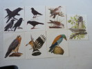 7 Images Différentes Oiseaux  Chocolat Cote D'Or éditions Artis Bruxelles - Cioccolato