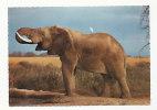Elephant. Edition East Africa. Kenya - Éléphants