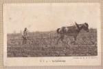 21 - Le Labourage Dans Les Vignes -   Edit : H.V. N°3 - France