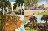 4 CPA - Paysages Fleuris (40917) - Etats-Unis