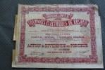 Belgique 1905 Cie Générale Des Tramways électriques De Rosario Action Dividendes Au Porteur Sans Désignation De Valeur - Transporte