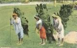 Etr - COSTA-RICA - Talamanca Indians Bringing In Thatch - Costa Rica