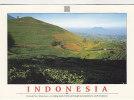 INDONESIA - AK 113307 West Java - Puncak Pass - A Winding Roads Climb Up Through Tea Plantations ... - Indonesia
