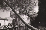 ROCHEFORT DU GARD (30) CARTE PHOTO  EGLISE ET SES ENVIRONS - Rochefort-du-Gard