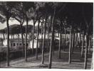 D1200- Scauri - La Pineta - Latina -  F.g. Viaggiata - Latina
