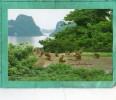 HA LONG BAY A PACK OF MONKEYS - Viêt-Nam