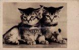 Carte Photo Signée (YLLA) - Deux Petits Chats - (voir Scan Recto-verso). - Katten