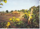 Village Africain (Yalogo?). Iles De Paix. Cases, Potager - Burkina Faso