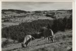 A Identifier Vallée Et Vaches - Cartes Postales