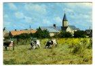 CP. 50 . COSQUEVILLE . LE VILLAGE DE L'EGLISE . ( Voir L´état ) - Autres Communes