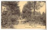 D7328 - HEIDE - Minnedreefje - Chemin Des Amoureux - Kalmthout