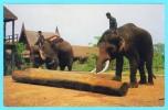 Postcard - Thailand   (6694) - Tailandia