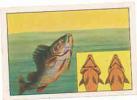 Comment Les Poissons Tendent Leur Opercule  -  Biotechnique /  Poisson Fish  // IM 29/14 - Nestlé