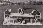 CHIMPANZEES - HAVING TEA AT WANNOCK GARDENS - Monkeys