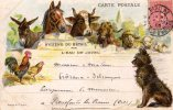 CPA.Publicité.Hygiène Du Bétail Par L'Eau De Javel.1905. - Reclame