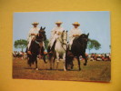Lima,The Famous Ambling Horses - Peru