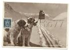 Pré-Saint-Didier (Italie, Val D'Aoste) : Cani Del Piccolo S; Bernardo En 1950 (animée). - Unclassified