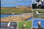 (700) Bird - Oiseau - Oiseaux De L'ile D'Oléron - Oiseaux