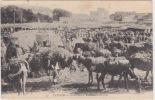 Tanger - Gran Soco - Vendedores De Paja / Cattle Market, ± 1910 /  1920 - Tanger