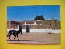 OASIS TOZEUR - Tunisie