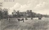 24Or     ANGLETERRE PEVENSEY CASTLE COWS - Non Classificati