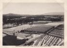 Photo Février 1909 ANTIBES - Les Etablissements Carriat Sous La Neige (horticulture) - Unclassified