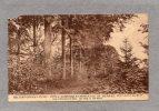 30094   Belgio,  Mont-Saint-Guibert, Ecole  Agricole  Et  Horticole  De  Bierbais, Une  Allee Dans Le  Bois,  NV - Mont-Saint-Guibert