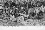 Trinidad BWI Old Postcard Breaking Cocoa 1905 - Trinidad