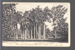 EGYPTE  Le Caire  Groupe De Palmiers Au Jardin  Esbekich  ( Recto Verso ) - Egypt