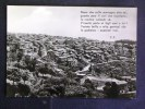 CALABRIA -CATANZARO -SAVELLI -F.G. LOTTO N°186 - Catanzaro