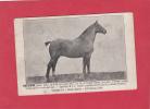 CPA - GUICLAN - Cheval Appartenant  à J.F. Normand , Propriétaire éleveur à KERILLY - Francia