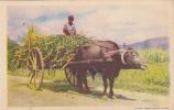 Ox Cart , Trinidad ,20-30s - Trinidad