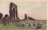 ROMA / LA CAMPAGNA ROMANA / - Roma