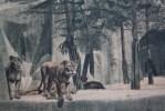 N°9-Lions D'Afrique—>Parc Zoologique Du Bois De Vincennes Chromo & Image: Thème Des Animaux Au ZOO - Vieux Papiers