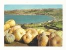 Cp, Malte, Ghadira Bay, Voyagée 1976 - Malte