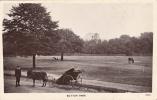 Carte Photo, Sutton Park, Animé - London Suburbs