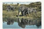 East Africa. Eléphants Qui S'abreuvent. Kenya. 1965 - Éléphants