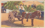 Old Mexican Caretta, Agua Caliente, Baja California, In Old Mexico, 1930-1940s - Mexique