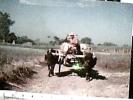 BANGLADESH  RURAL TRANSPORT BUFFALO CART CARRETTO  BUFALI V1991 DU1303 - Bangladesh