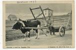 Charrette A Boeuf En Gaspesie PQ Ox Cart P. Used  Canada 1937 - Gaspé