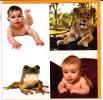 CPM GRENOUILLE LION LIONCEAU BEBE Vicky Ceelen 16 Par 16 Double Avec Enveloppe - Lions