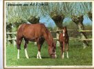 -  CALENDRIER Image Recto-Verso 1975 - Au Haras Et Taquinerie ( Tortue ) . - Calendars