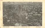 PORTUGAL - RIO MAIOR - ENTRADA PARA O DESFILADEIRO DAS BOCAS - 1910 PC - Santarem
