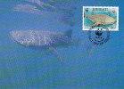 KIRIBATI -  AK121485 WWF Offical Maximum Card + Stamp - Whale Shark - Kiribati