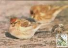 C.O.B. 2457  Sizerin Flammé - Barmsijs. Timbre Oiseau D´André Buzin. - Maximumkaarten