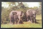 New York Zoological Park   :::: éléphants - Animaux - Zoo - Afrique - Éléphants